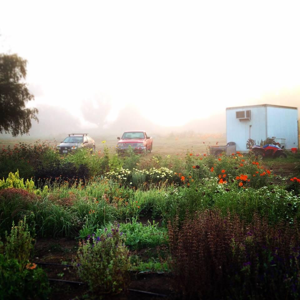 Chica Bloom Farm