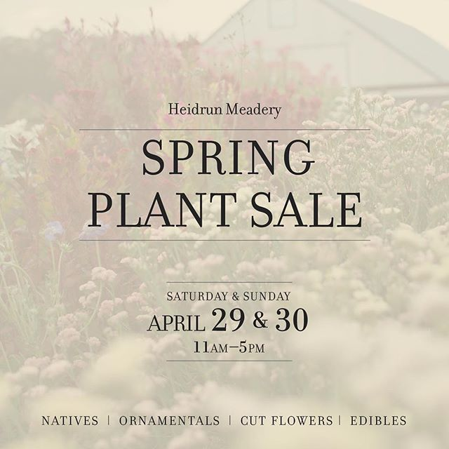 Visit NBFC member, flower farmer and horticulturist @heidrunmeadery, Jordan Uth, to enhance your pollinator garden, flowerbed or planter at Heidrun Meadery's Spring Plant Sale coming April 29th and 30th 11a-5p in Point Reyes Station. She'll be there to talk plants, species selection and care. Treat yourself to a glass of sparkling mead while you're there! #pointreyesstation #plantsale