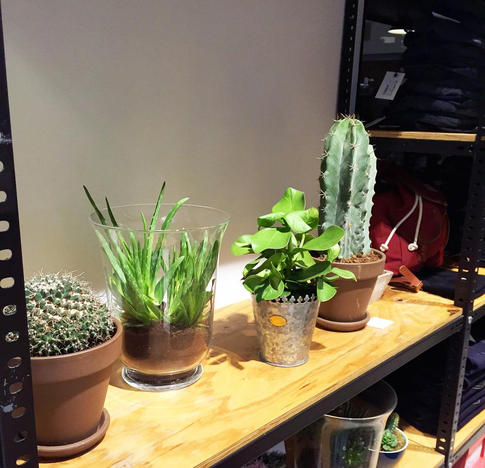 trimmer-cactus