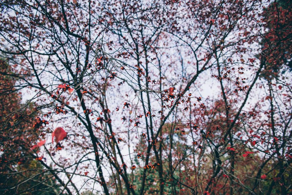 Laura + Venko Westonbirt Arboretum Autumn Preshoot Low-53.jpg