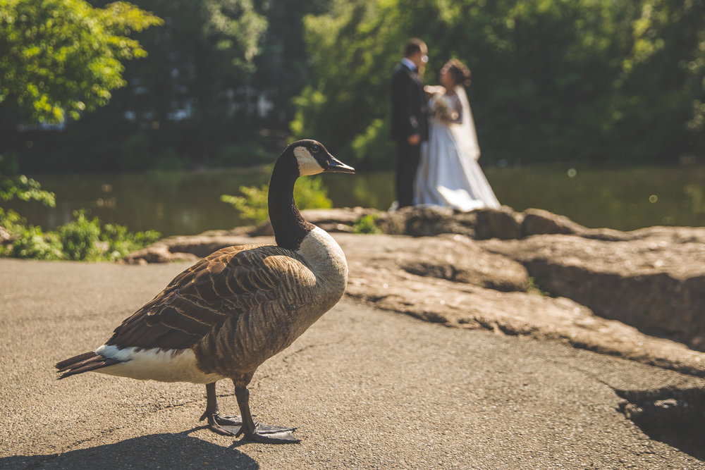 baku-Restaurant-wedding-photography-central-park-12.jpg