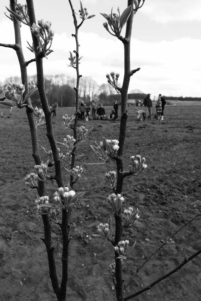 Skolen+planter+skov+i+Voel+-stor+4.jpg