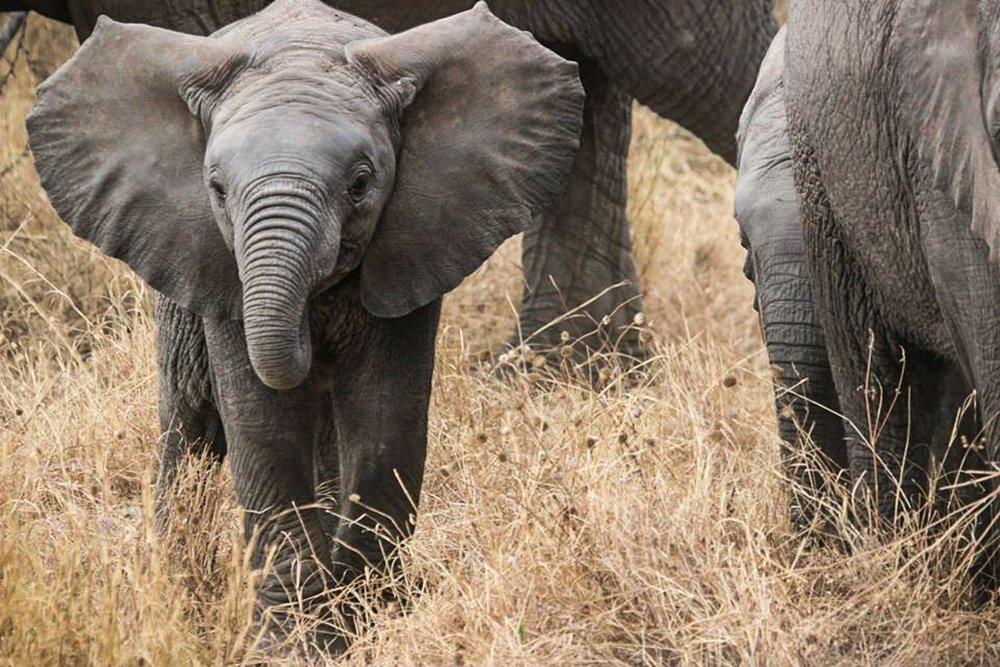 elephant-baby-285515_1920.jpg
