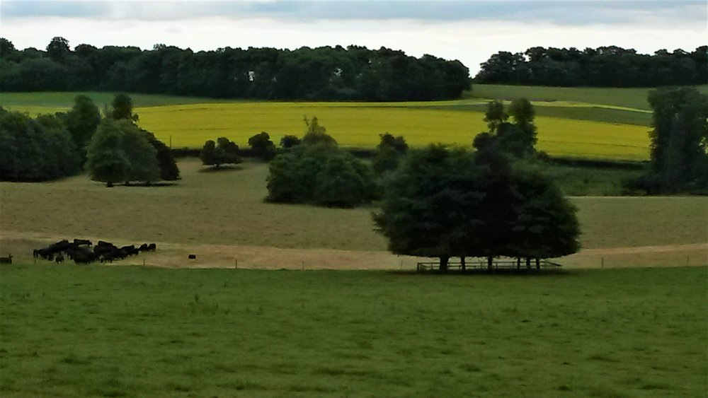 View from Woolley apiary