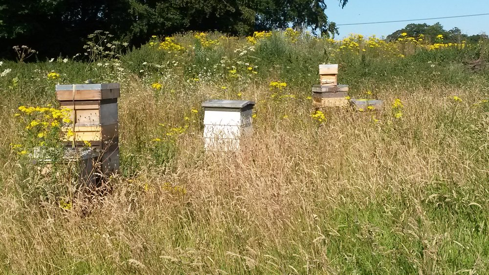 Yattendon Estate apiary