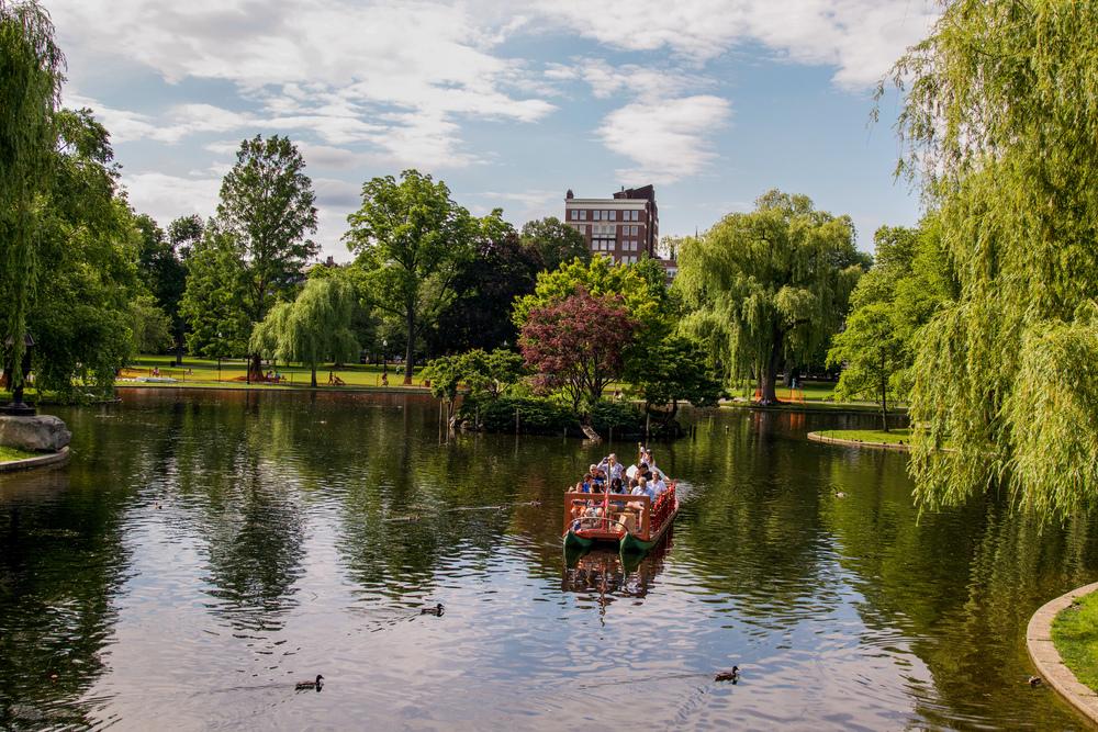 Swan boats in the pond in Boston Public Garden.