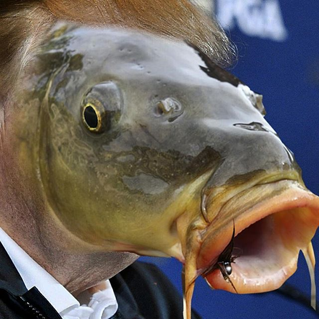 #donaldtrump #invasivecarp #ilrp #illinoisriverproject #donaldtrump2016