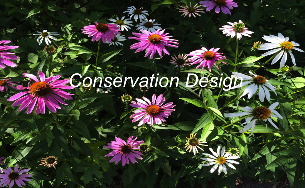 conservationDesign.jpg
