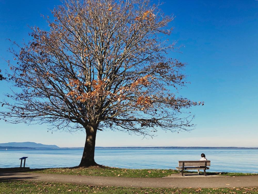 Autumn-Tree.jpg