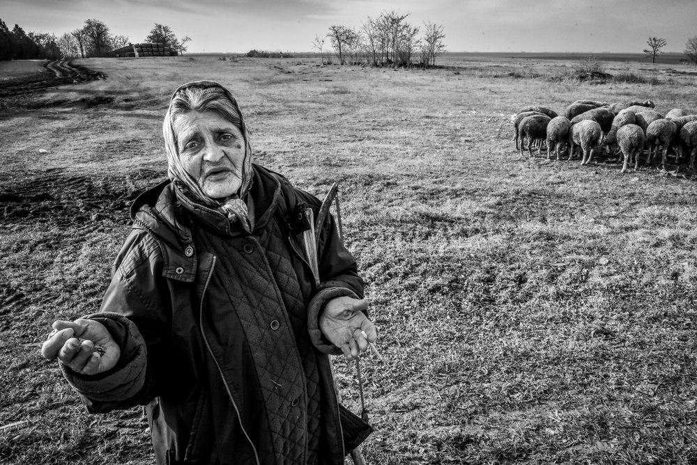 woman shepherd near Bogaraš in  North Banat District population-524