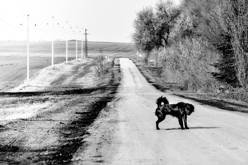 dog watching the lonely road near OBORNJAČA  first dead village in Vojvodina