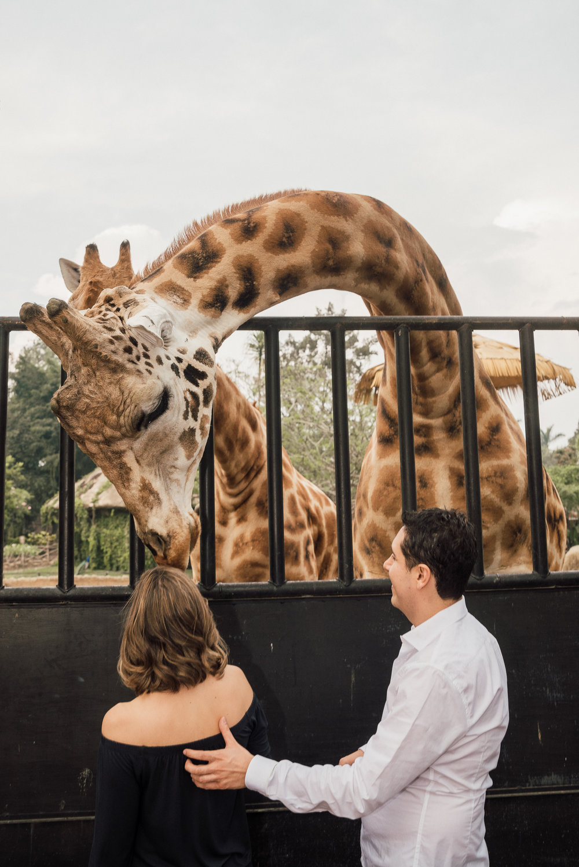engaged in love couple in Guatemala Zoo La Aurora