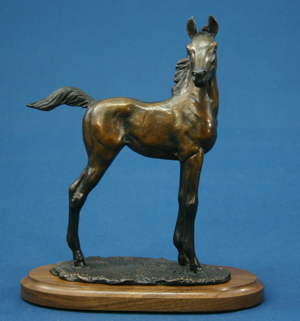 New Fancy bronze standing filly2014.jpg