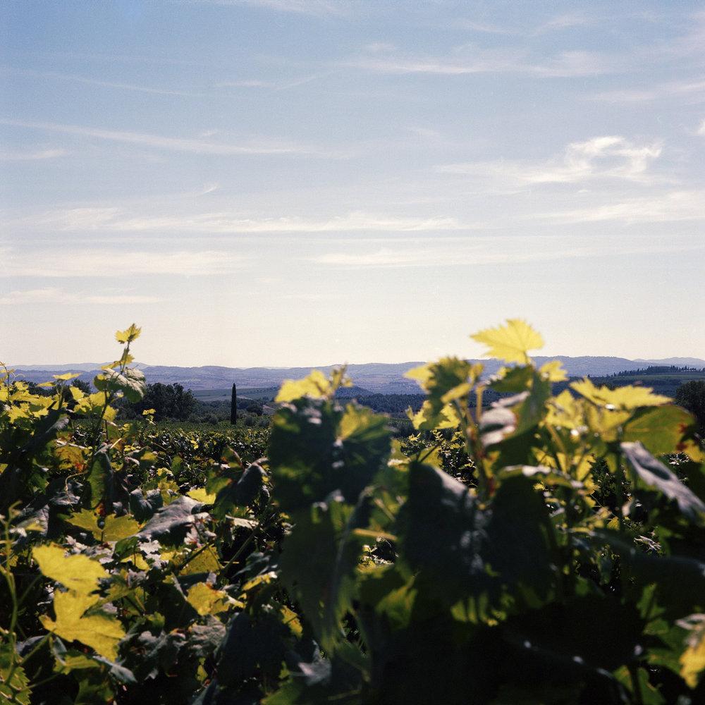 Metaxas photography mate winery.jpg