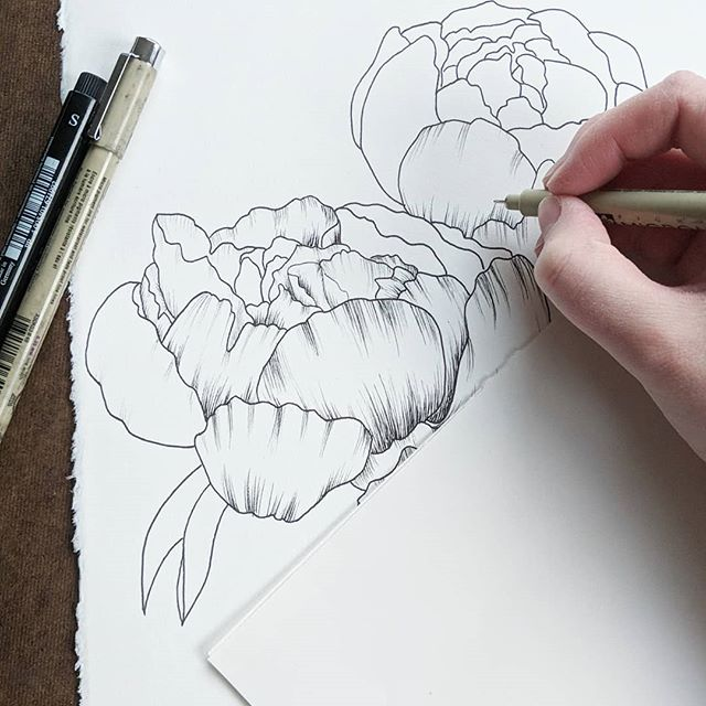 Working on a drawing to add to some prints for my Etsy. Over if my 2019 goals is to get some prints made of my work. Do you like to see floral illustrations with just one type of flower or a mixed  bouquet? I can't wait for this peonies in my yard to bloom so I can stop working from photos. ______ @arches.art paper  @micronart & @fabercastellusa pens _____ #rebeccashores #floraldrawing #floralsyourway  #wipart #rebeccashoresmua #Smallartist #supportlocalar #seattleart #pnwartist #seattleartist #simplethingsmadebeautiful #BOTANICALART  #makearteveryday #artistsofinstagram #emergingartist #mybeautifulmess #seattle #archespaper #pigmamicron #artforsale #etsyartist #fabercastell