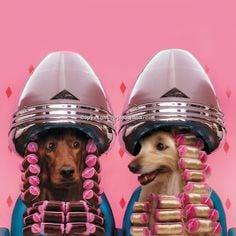 dogs in hair dryer.jpg