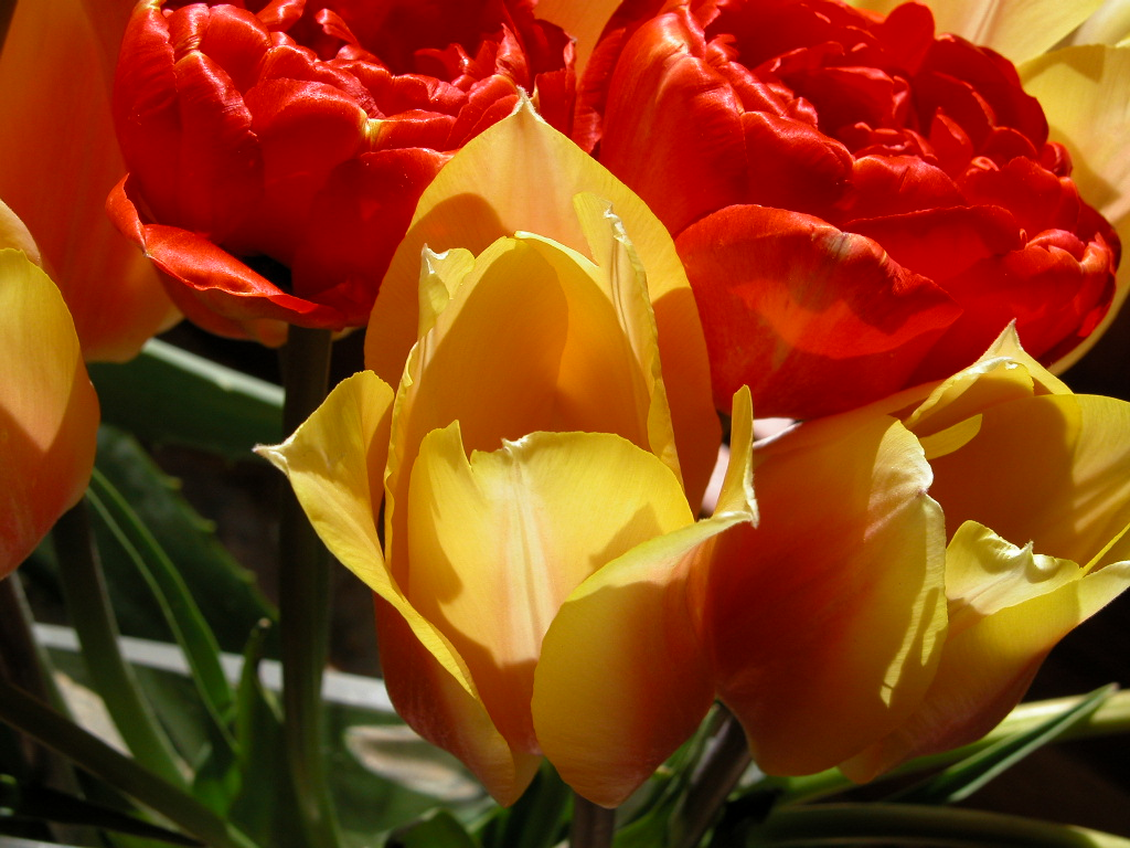 Easter Tulips (1)