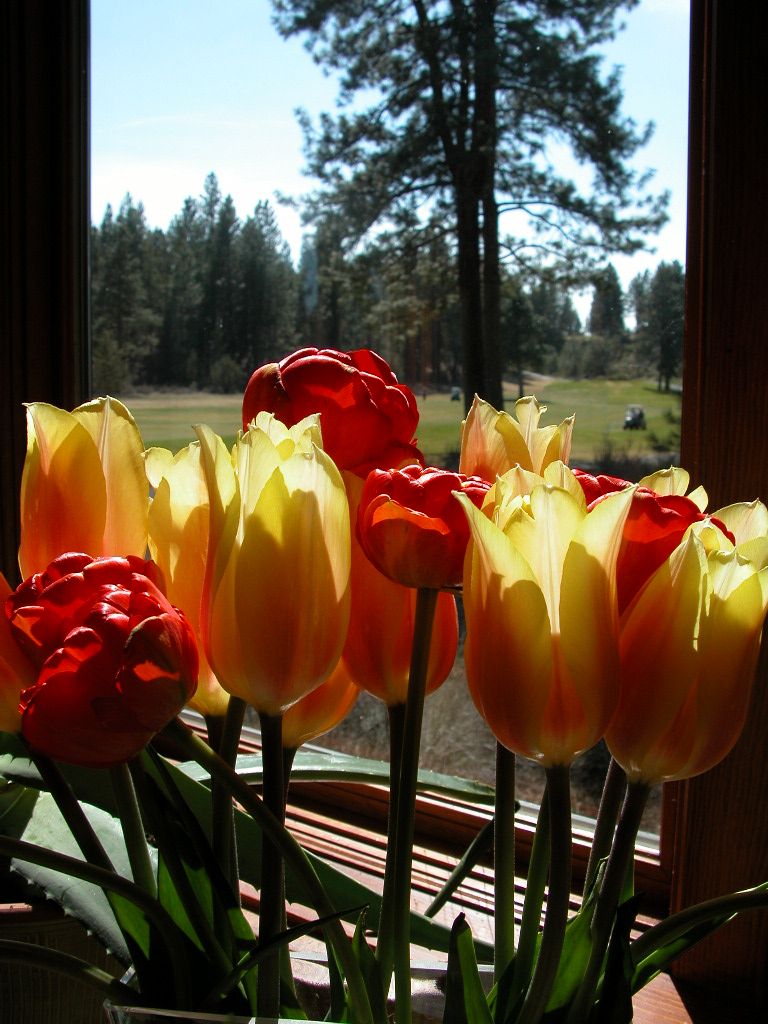 Easter Tulips (2)