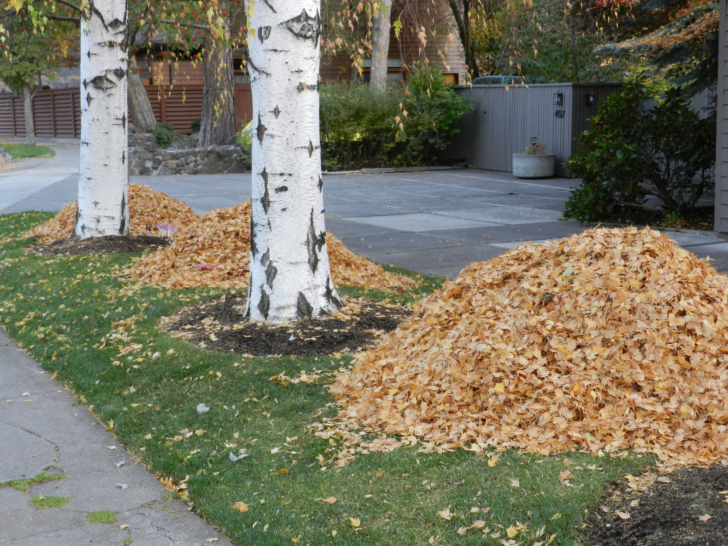 Fall means leaf piles