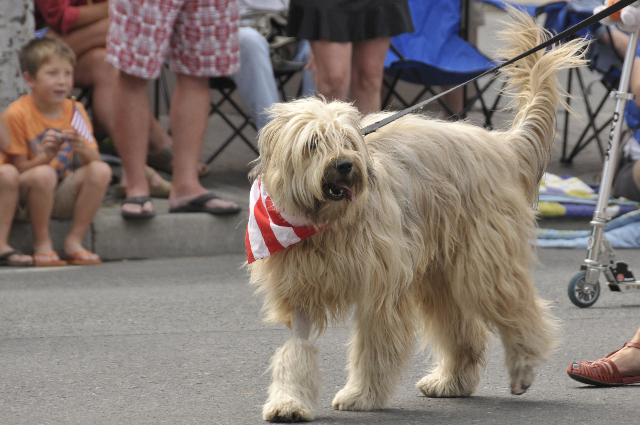 July 4th 2014 Pet Parade (5)