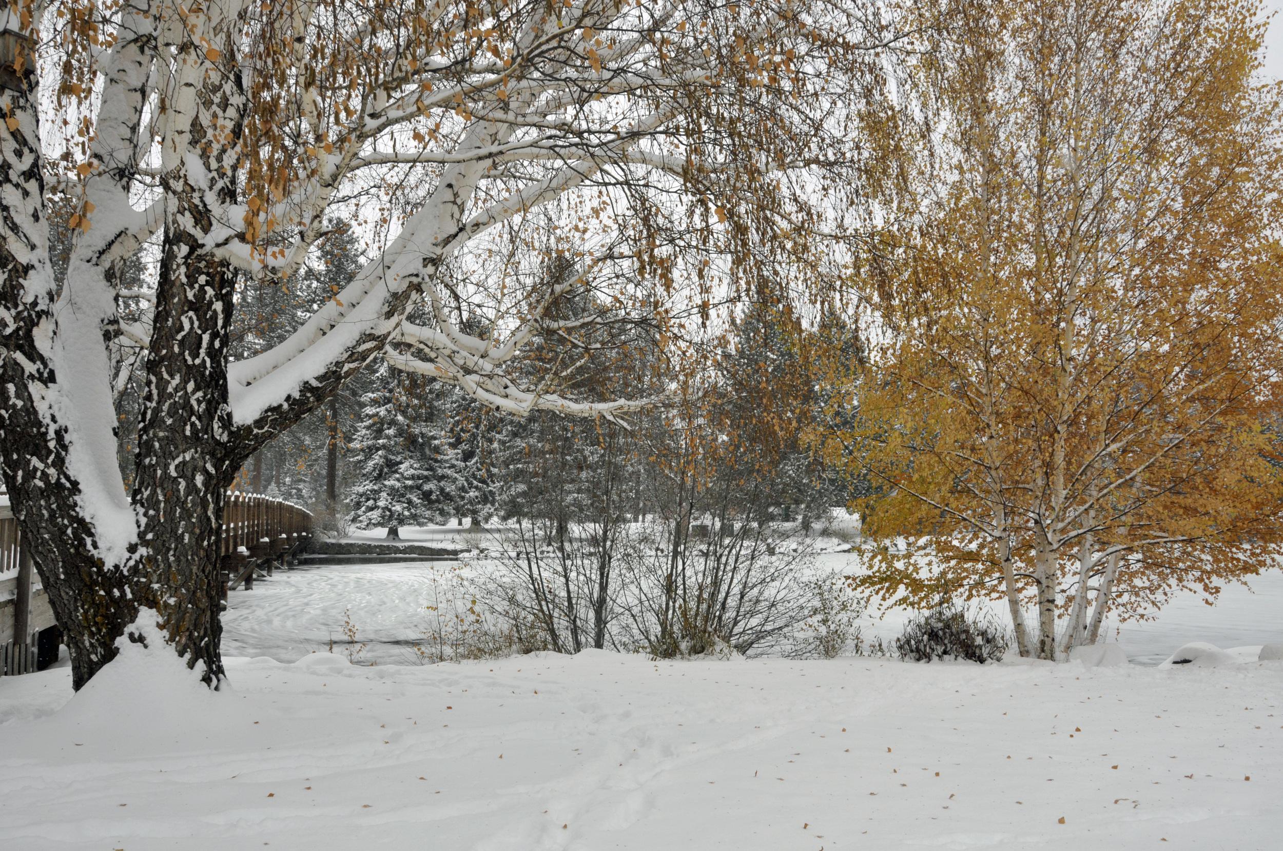 November 13 Snow (50)