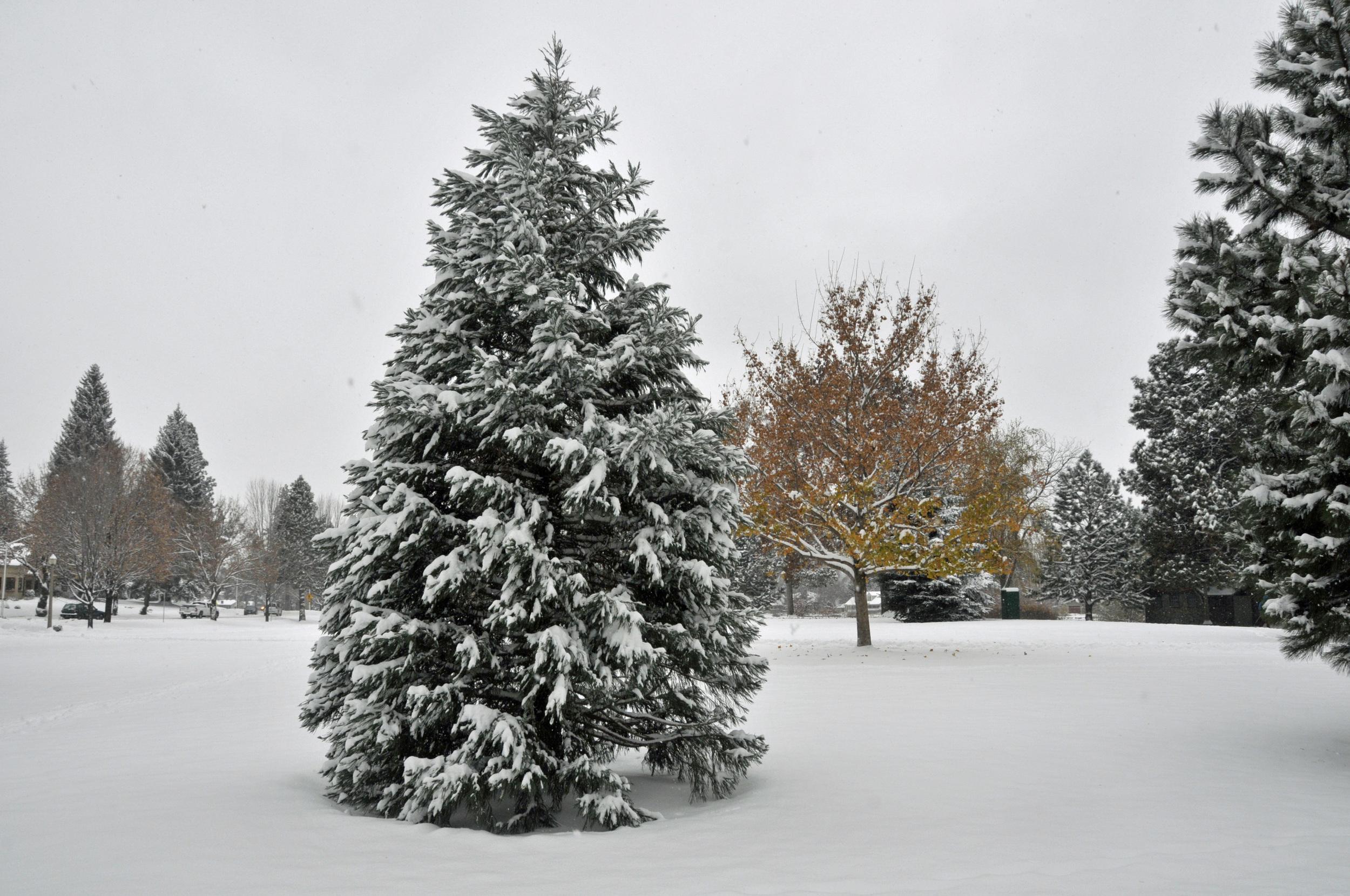 November 13 Snow (62)