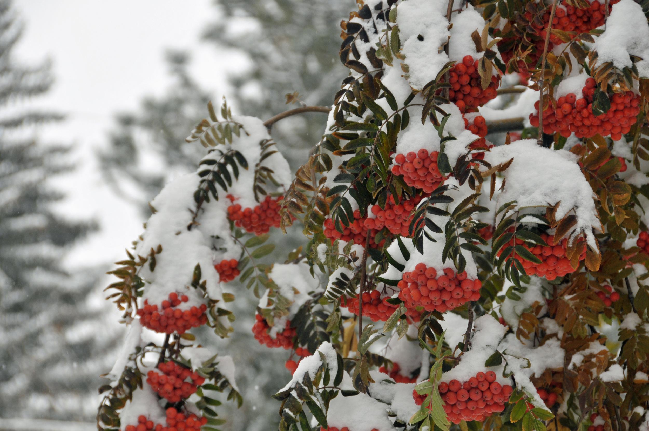 November 13 Snow (41)