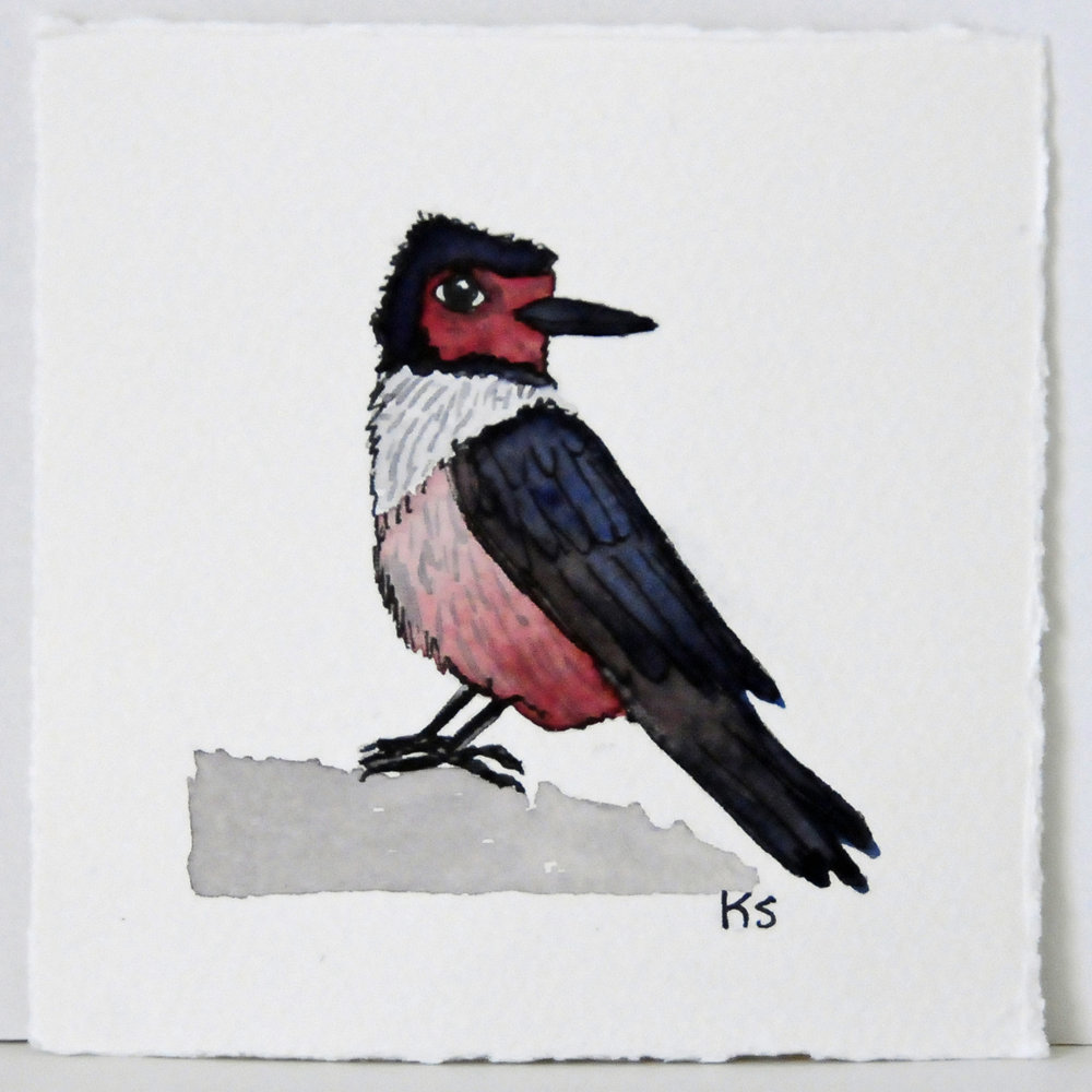 Watercolor birds- Lewis's Woodpecker.jpg
