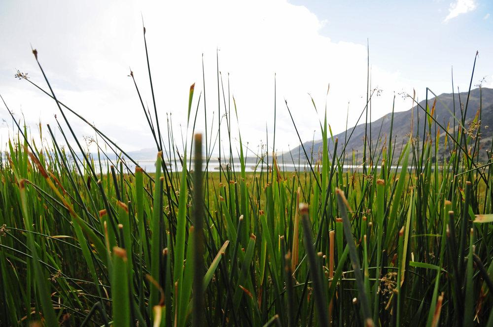 Mono Lake (8).JPG