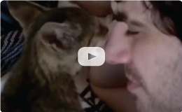 Kitten Licks Jew's Nose