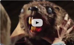 (18+) ZOMBEAVERS Theme Song