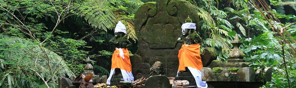 yoga and nature retreats.jpg