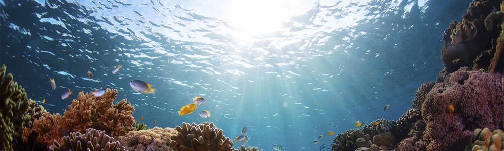 scuba diving retreats.jpg