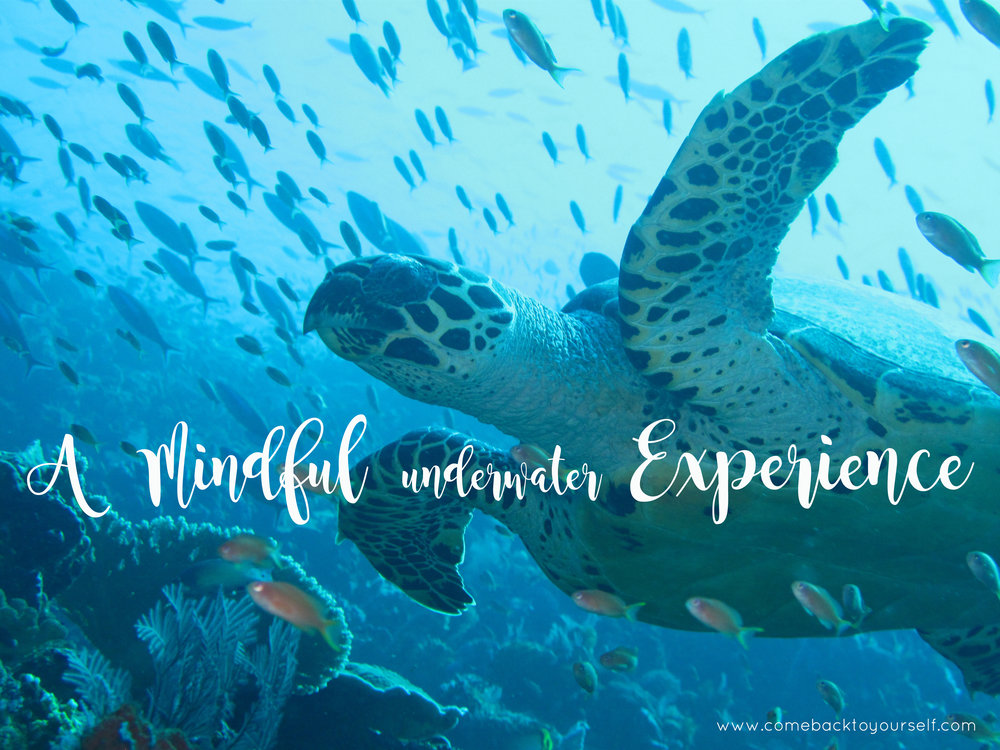 mindful underwater experience