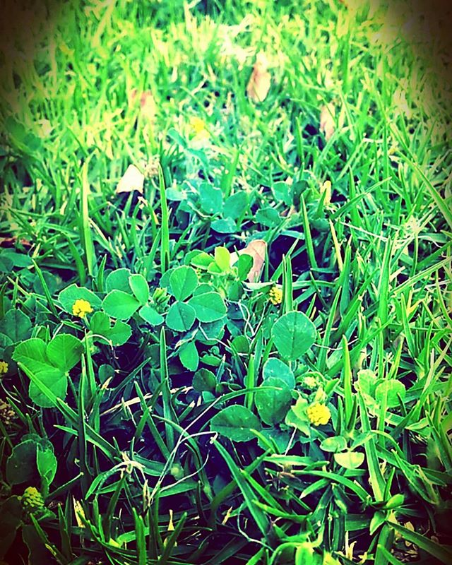 Nourish yourself as the soft grass gently kisses your feet 🌿🌾 #comebacktoyourselfretreats #nourish #greengrass #comehometoyourself #lovingkindnessmeditation #mindfulwalking #loveyourself #yogadivingretreat #baliyogaretreat
