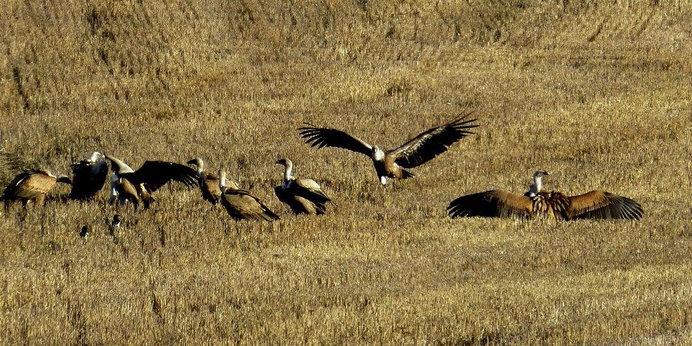 Nature, Wildlife & Birds