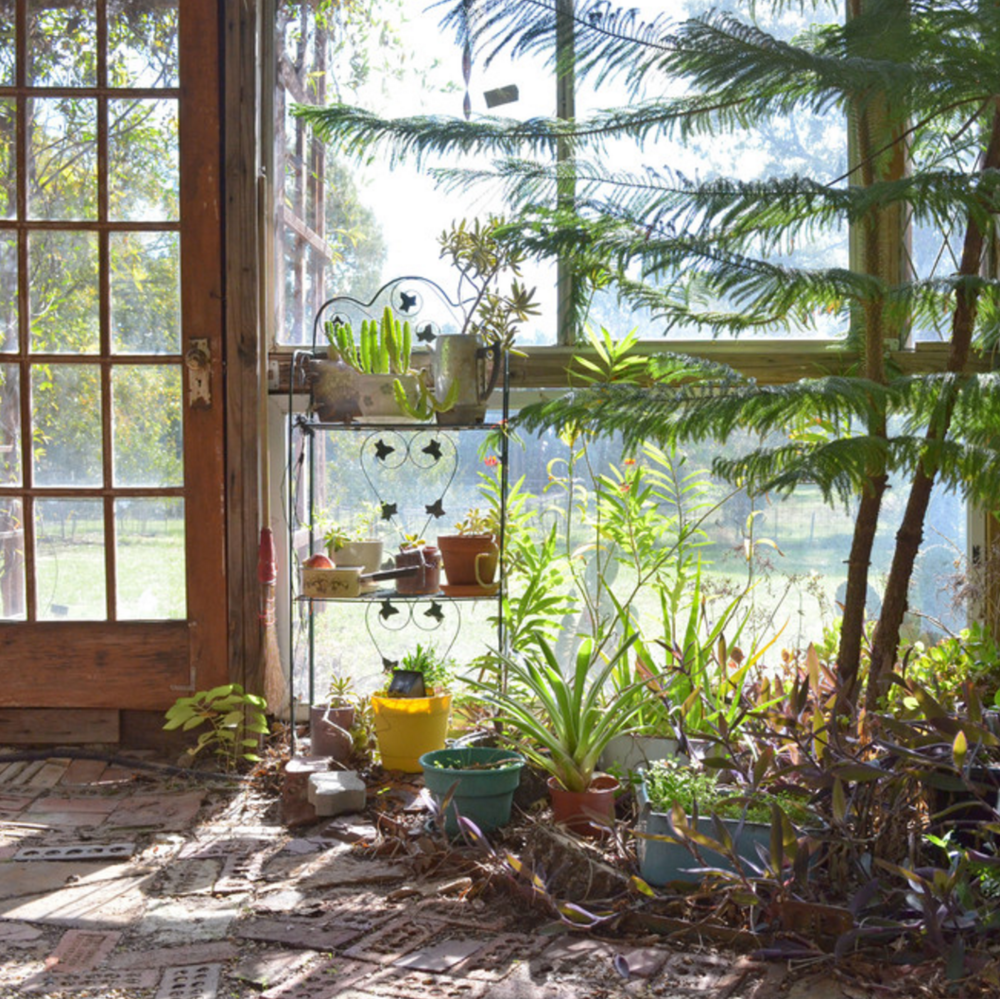 Boho Greenhouse  |  Carolyn Pace