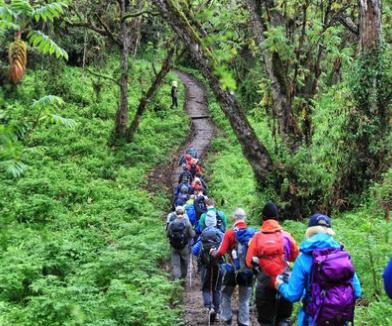 Kilimanjaro-rongai.png