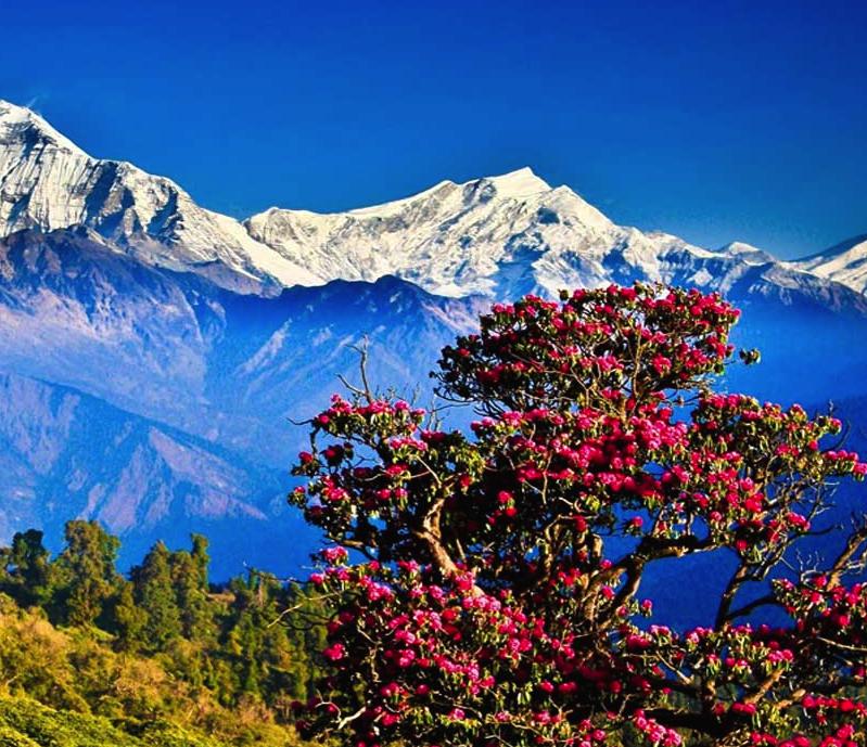 Bhutan-explorer.png
