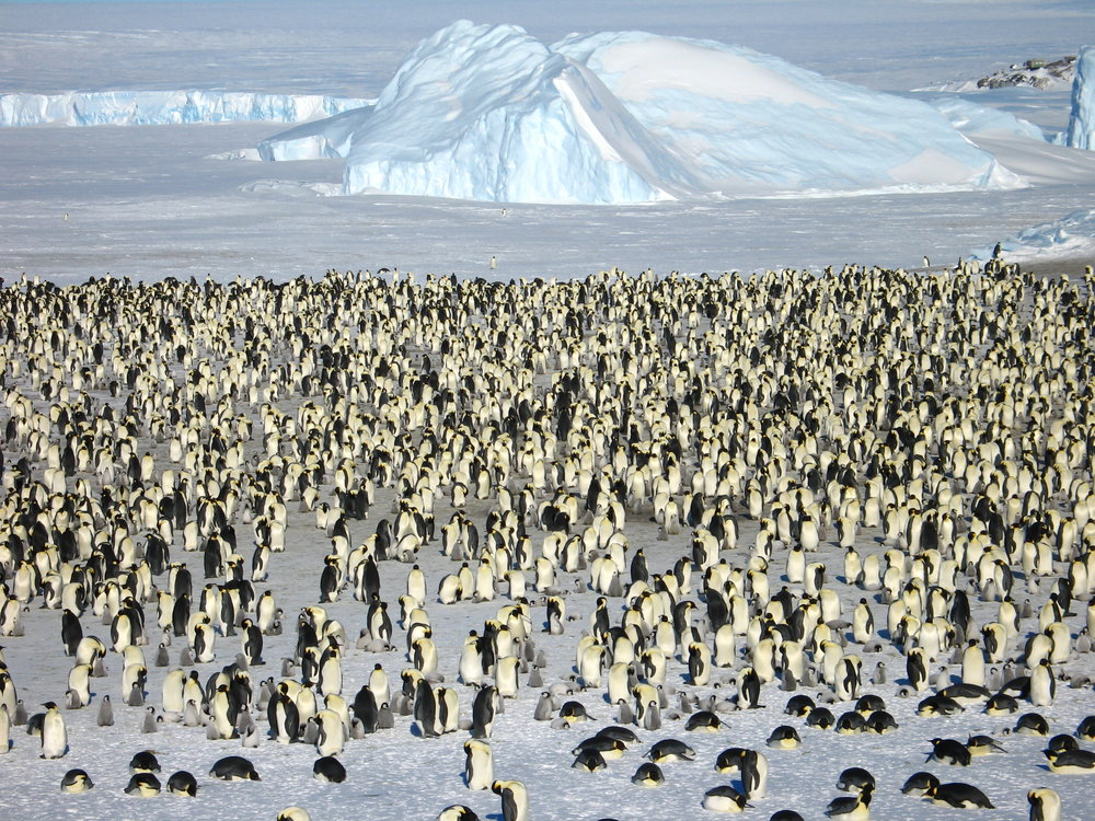 flock of penguins copy.JPG
