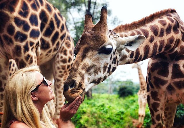 Making new friends in Nairobi 🦒 ⠀⠀⠀⠀⠀⠀⠀⠀⠀⠀⠀⠀ When you climb Mount Kenya we always recommend extending your stay to experience a magical Kenyan safari.  However, if you're pushed for time you can still get up close and personal with some amazing animals at Nairobi's Giraffe Conservation Center or the Elephant Orgphanage. Both charities are doing life changing work to protect these animals, giving many of them the helping hand they need to be strong enough to be released back in to the wild.  They're also both close to the centre of Nairobi, and can easily be visited during a day stopover on the way to Kilimanjaro, Safari, or the Coast. #collectmomentslikethese