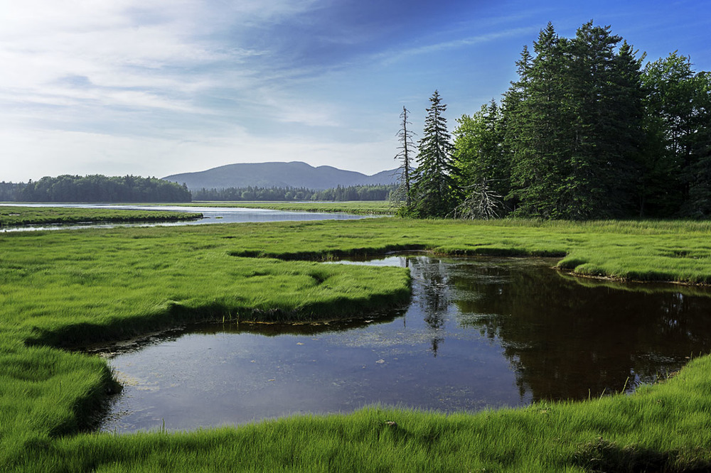 Bass Harbor Marsh and Buttermilk Brook, Acadia National Park. © 2014 Chris Nicholson