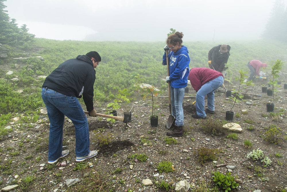 Volunteers help with plantings at Glacier National Park. NPS photo by Jacob W. Frank.