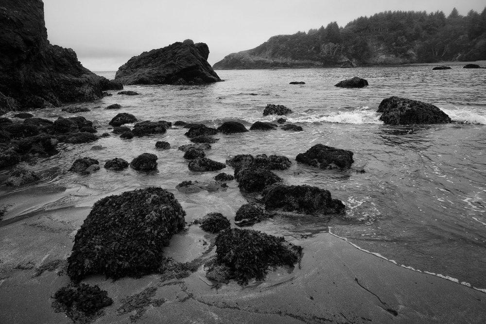 Redwood-7.jpg