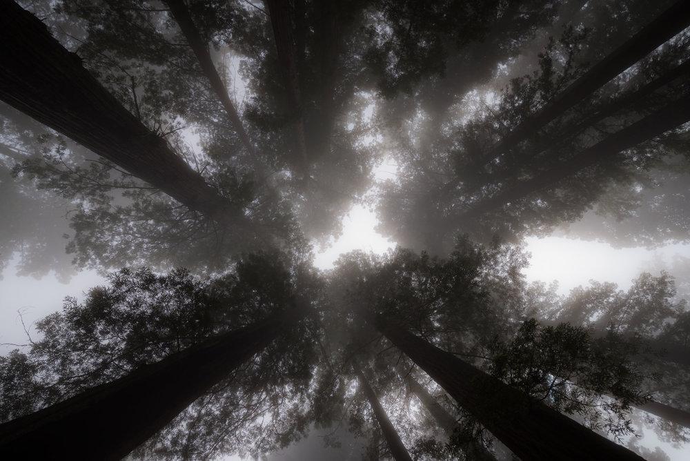 Redwood-18.jpg