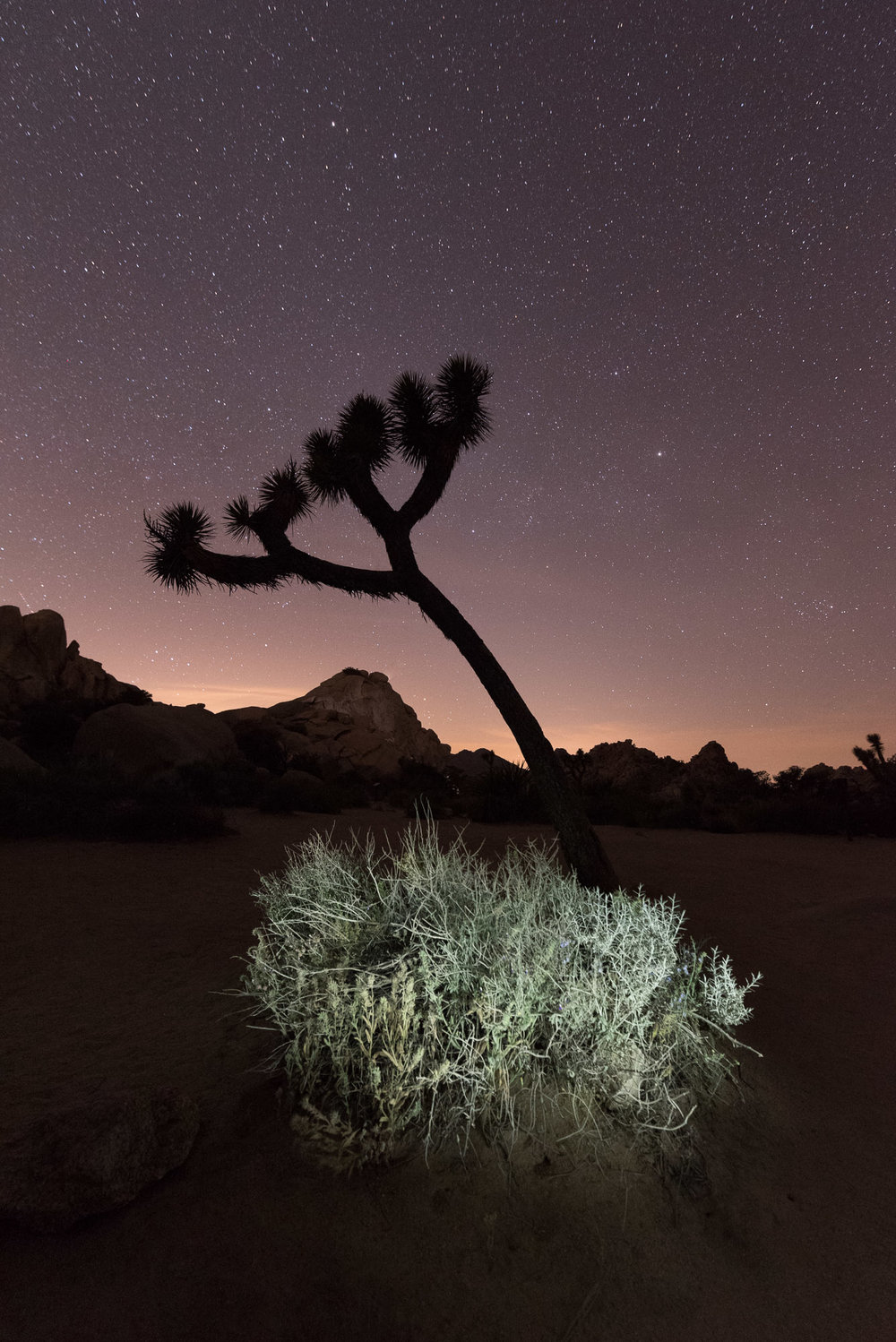 Joshua Tree National Park. 20 seconds, f/3.5, ISO 6400. Lingering twilight in the western sky combined with light painting on the foreground.