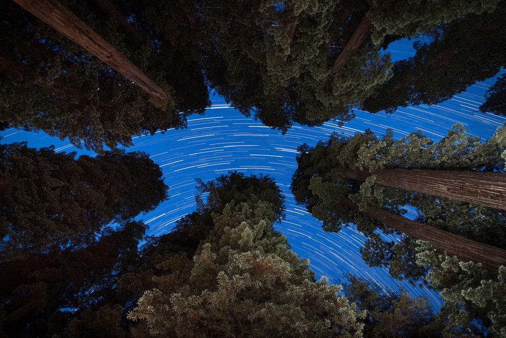 Redwood-14.jpg