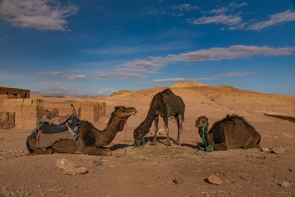 Morocco-2689.jpg