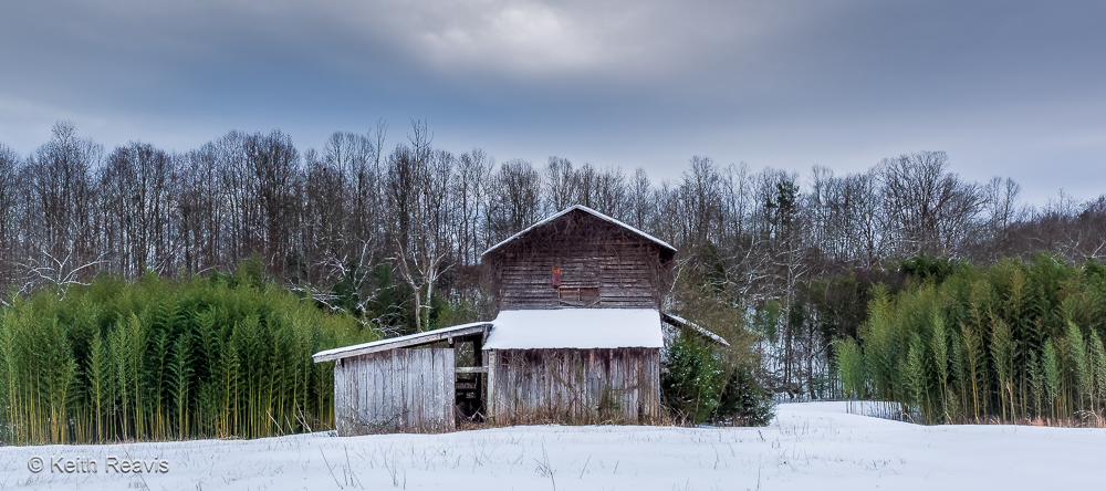 Bamboo, Barn, and Snow