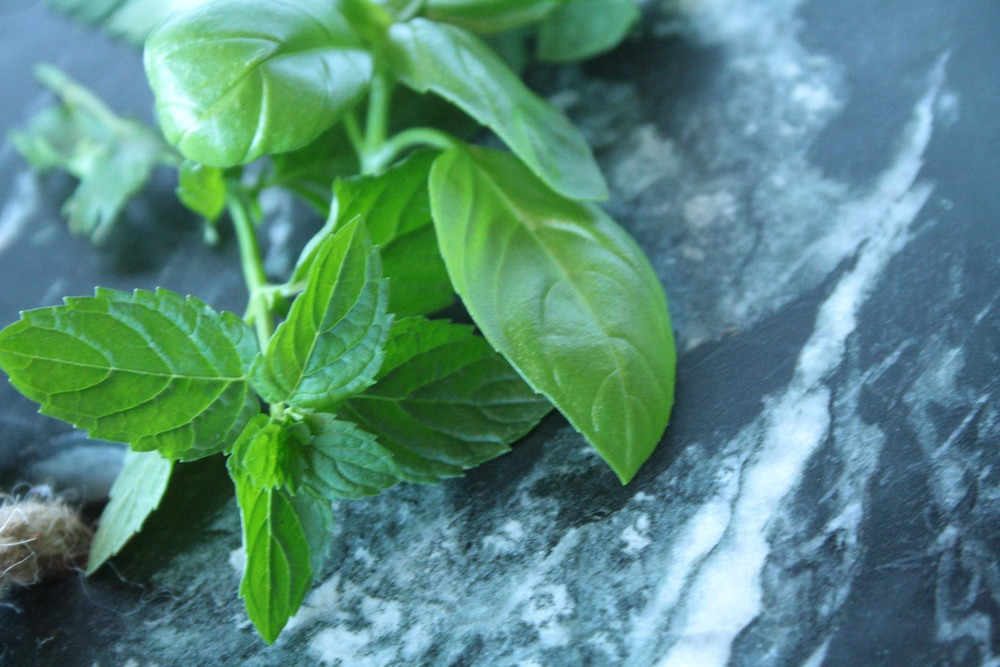 Close up of fresh mint and basil